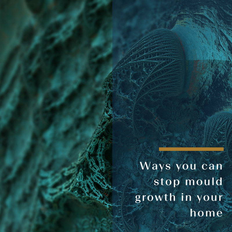 Ways you can stop mould growth in your home